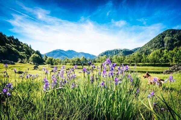 Blumenwiese im Chiemgau - Reise-Podcasts