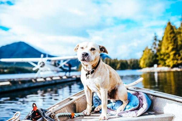 Hund auf einem Boot im Chiemgau