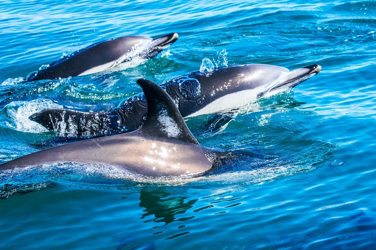 Delfine - Roadtrip entlang der Algarve