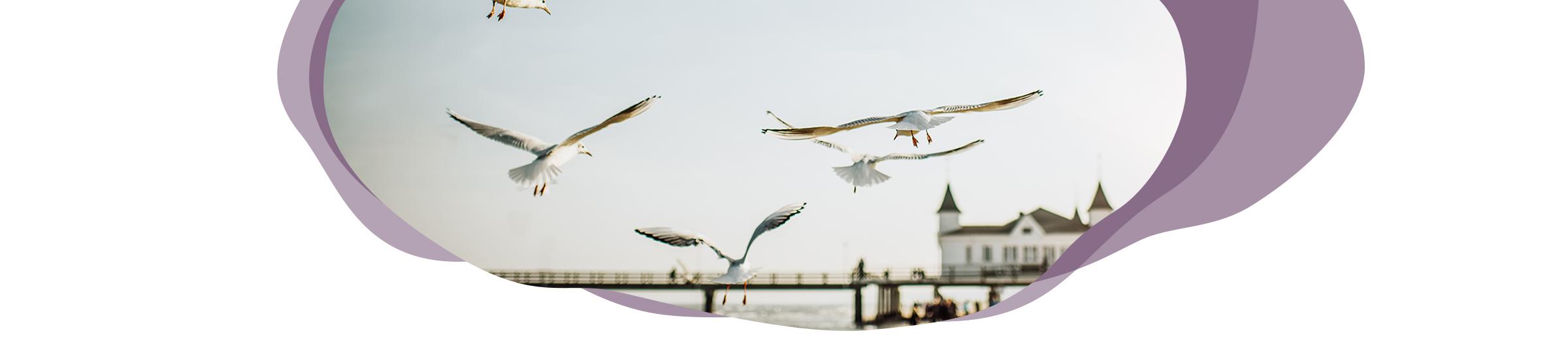 Digitale Reise Mecklenburg-Vorpommern Header