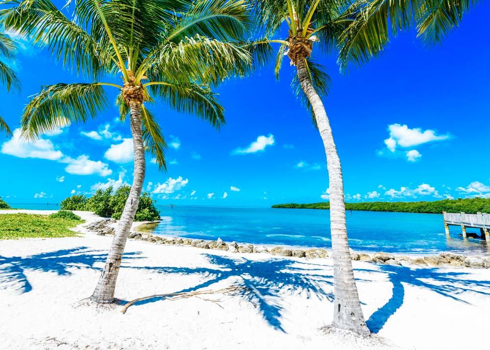 Palmen am Strand in Florida