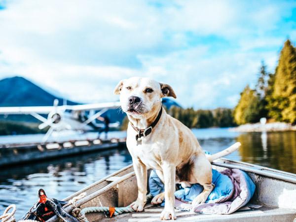 Hund im Boot - Hundeurlaub am See