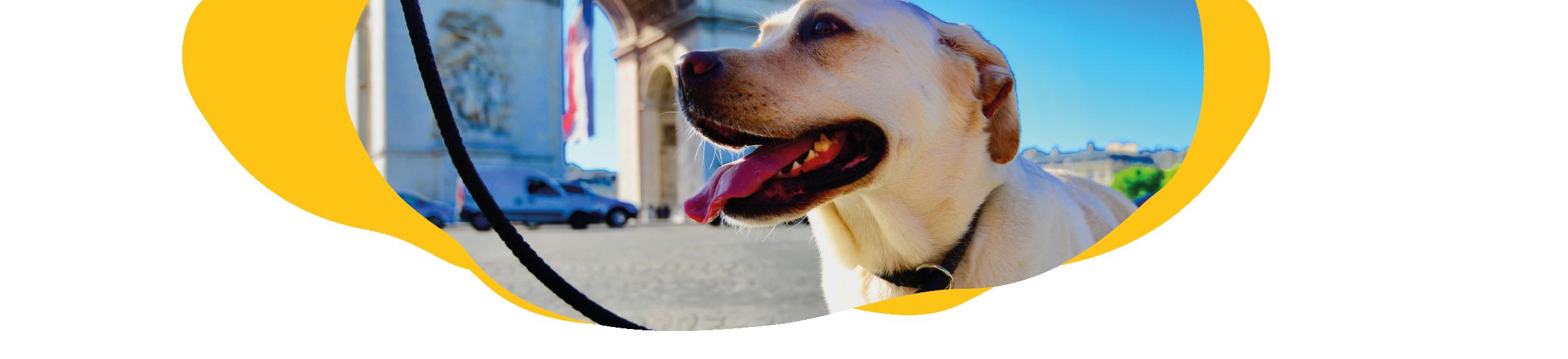 Einreise mit Hund nach Frankreich Header