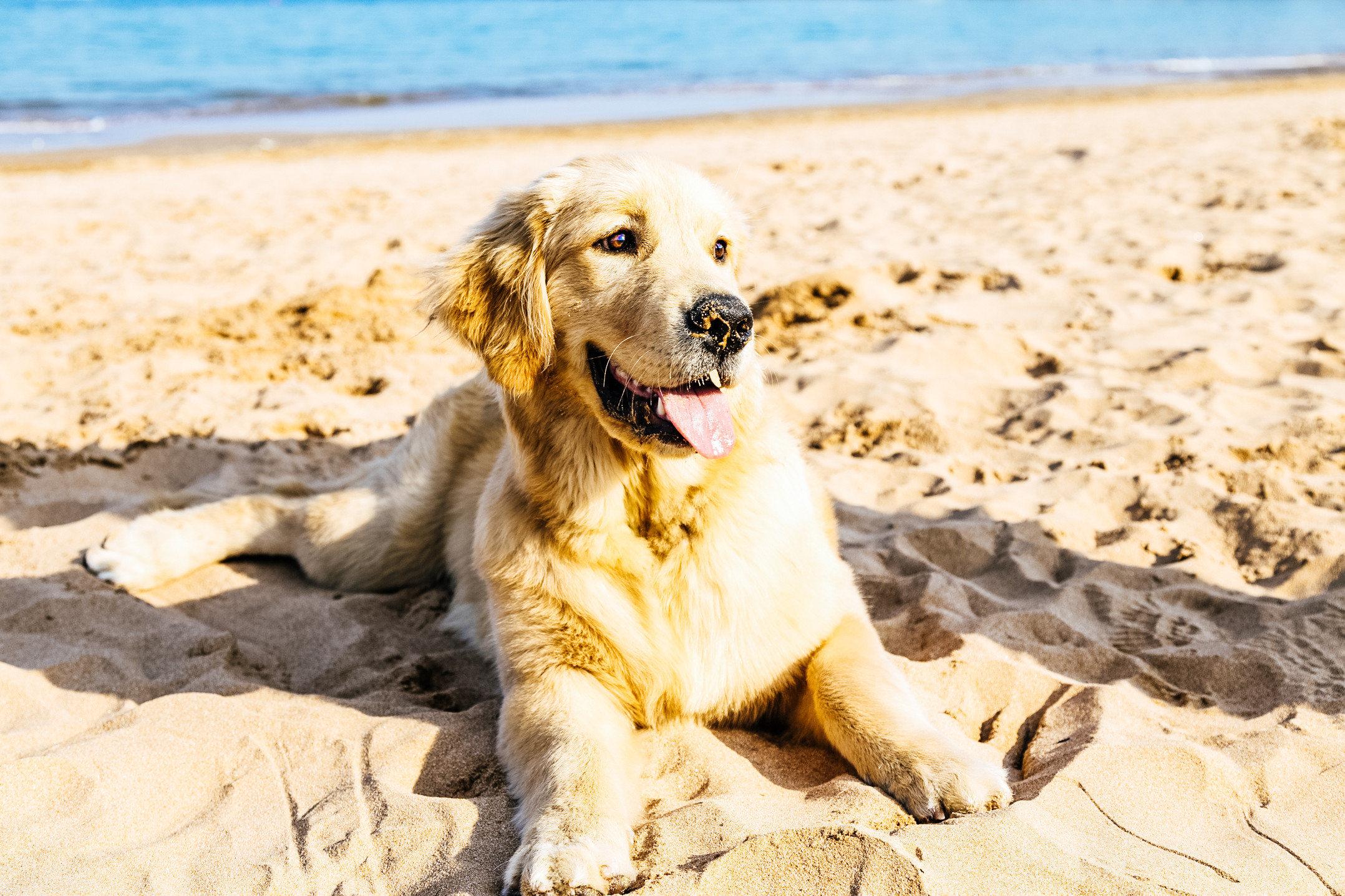 Hund liegt im Sand - Nordsee mit Hund