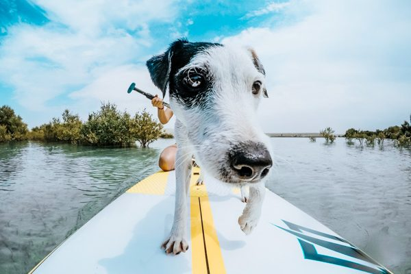 Hund auf dem Paddelboard - Hundeurlaub am See