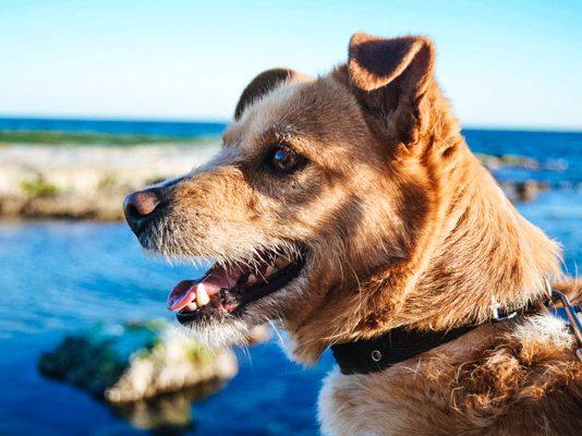 Hundekopf - Hundeurlaub am See
