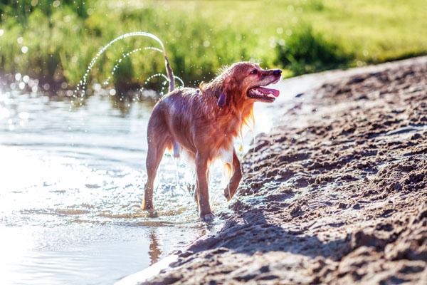 Hund im See im Chiemgau