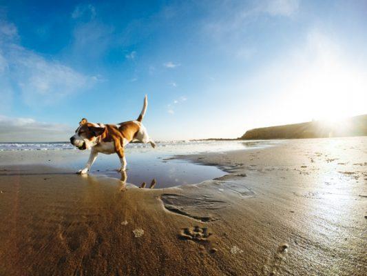 Hund rennt am Strand - Hundeurlaub am See