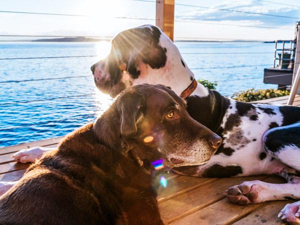 Hunde liegen am Steg - Hundeurlaub am See