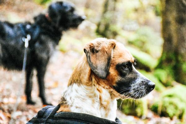 Hunde im Wald - Urlaub mit Hund Tipps