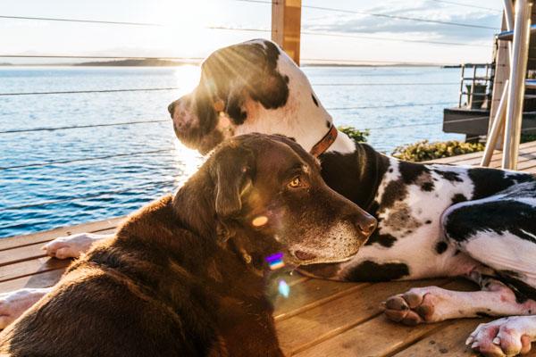 Hunde am Wasser im Chiemgau