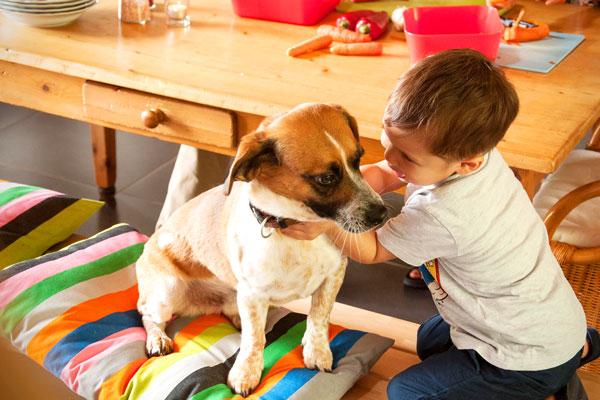 Kind mit Hund am Tisch - Ferienhaus vs. Hotel