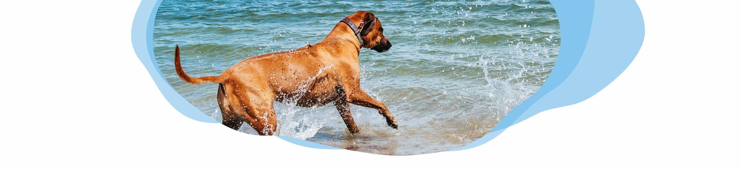 Nordsee mit Hund Header