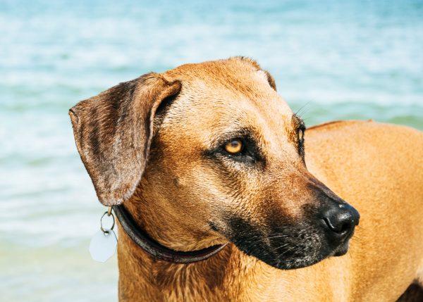 Hund im Wasser - Nordsee mit Hund