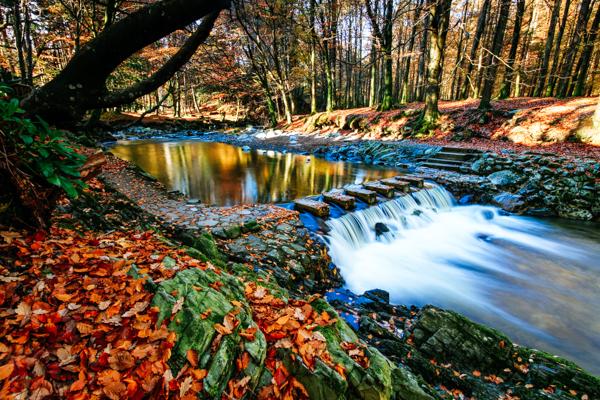Tollymore Forest, Nordirland - GoT-Drehorte