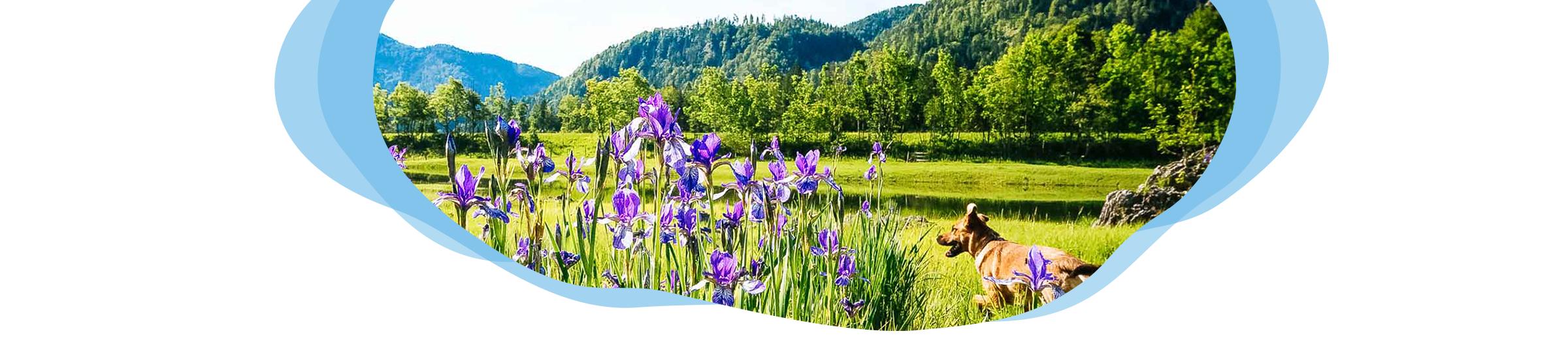 Urlaub mit Hund im Chiemgau Header Bluemenwiese