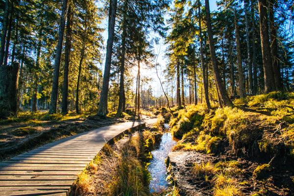 Wald im Harz – Film-Drehorte in Deutschland