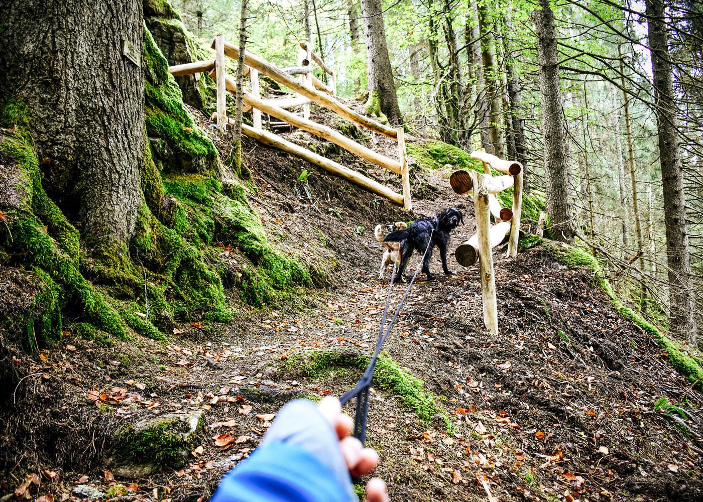 Wandern mit Hund - Wanderurlaub mit Hund
