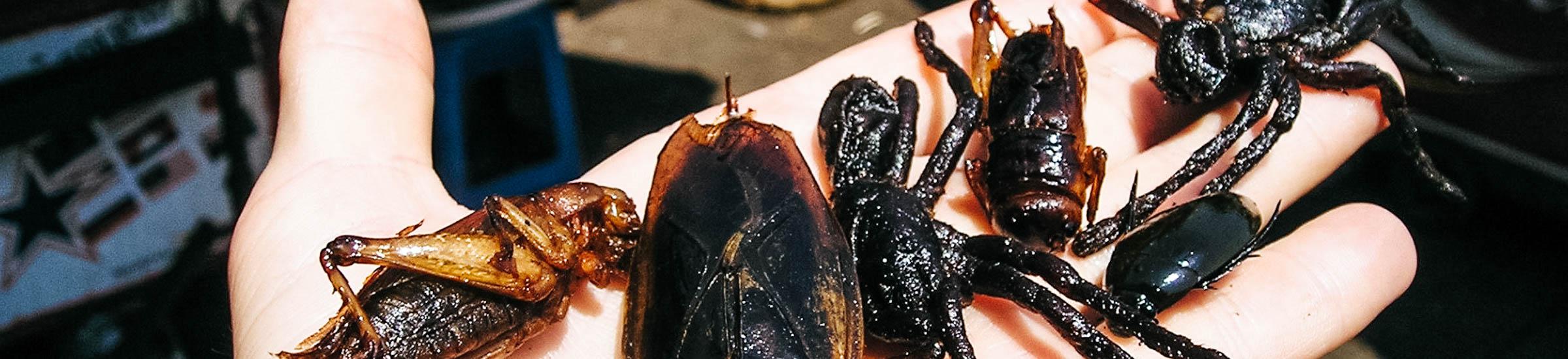 Insekten auf der Hand