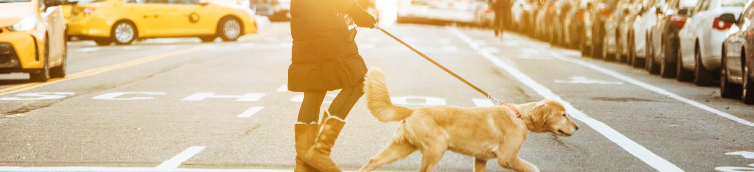 Spaziergang mit Hund auf der Straße, Autos im Hintergrund