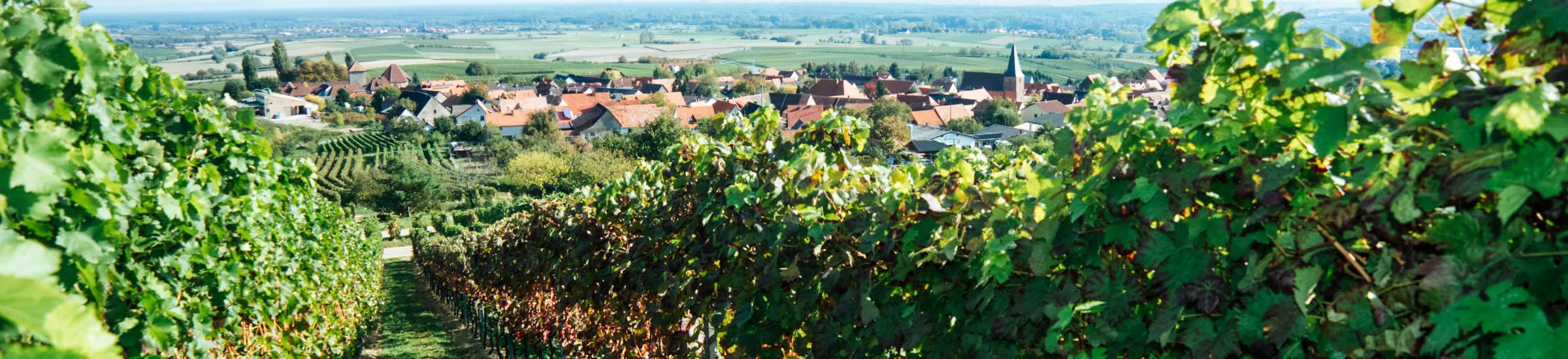 Weinberge in der Pfalz mit Blick auf eine kleine Ortschaft – Deutsche Weinstraße