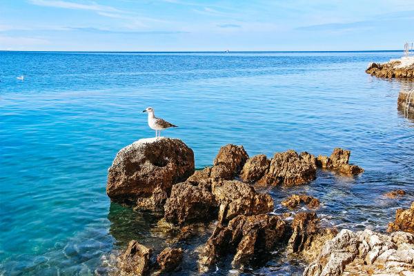 beautiful-landscape-of-sea-coast-of-adriatic-sea-with-with-a-seagull-a-stone-shore-and-transparent-blue-water-near-rovinj-croatia