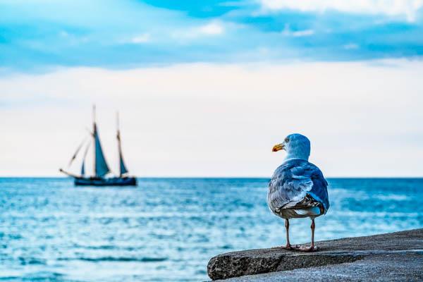 Segelschiff und Möwe an der Ostsee