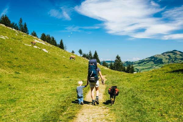Vater mit Kind und Hund in den Berge, Kühe im Hintergrund