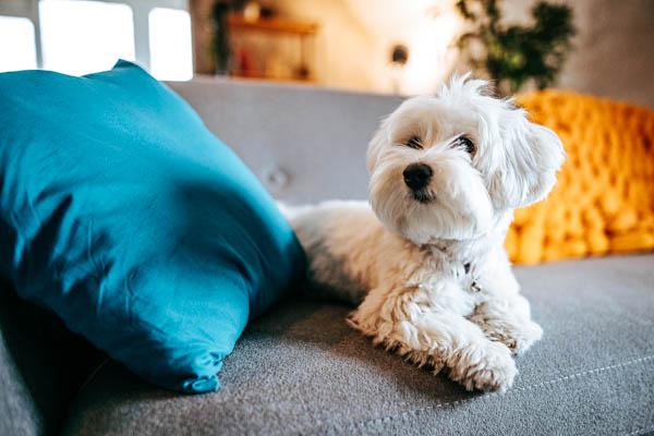 Dürfen Hunde mit in die Ferienwohnung? Legen Sie es in Ihrer Hausordnung fest!
